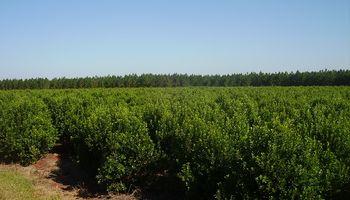 Con capacitaciones, buscan optimizar el rendimiento en las plantaciones de yerba mate