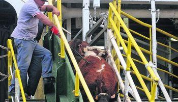 Aprobaron el protocolo sanitario para importar ganado de Uruguay