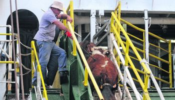Crece el interés de Argentina por importar ganado desde Uruguay