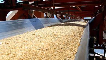 Brasil suprimió el arancel para comprar maíz