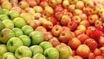 Entran manzanas de Chile mientras la fruta se pudre en el Sur
