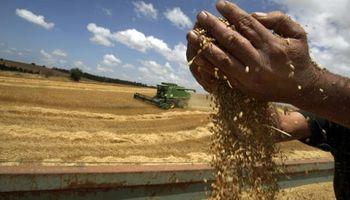 Después de 43 años, la Argentina volvió a importar trigo