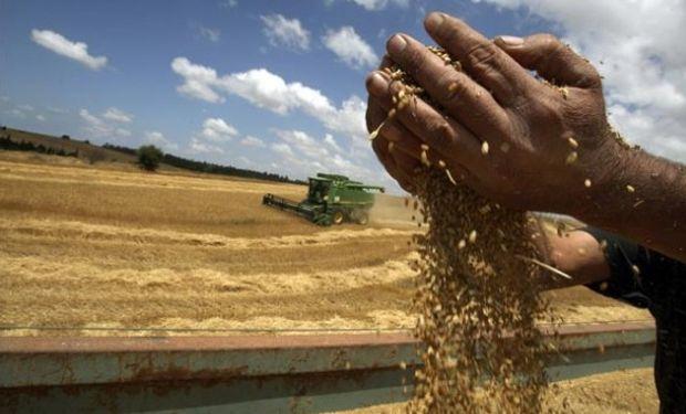 Argentina volvió a importar trigo el viernes pasado.