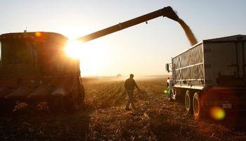 Brasil está listo para importar maíz transgénico desde Estados Unidos