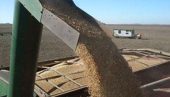 Impuesto a las Ganancias: aspecto a tener en cuenta para la comercialización de granos