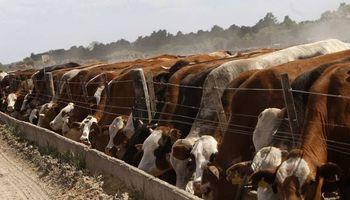 Un impulsor de la nueva ganadería