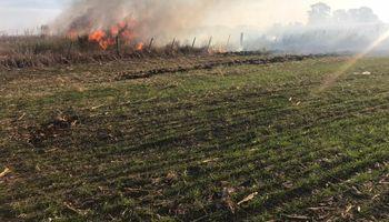 """Nuevos incendios preocupan a productores y acusan al Gobierno de """"ignorar la quema deliberada de alimentos"""""""