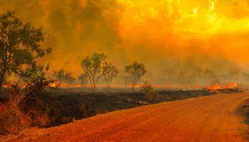 Los incendios afectan el 20% de la ganadería vacuna australiana