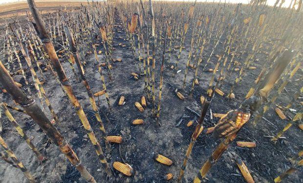 Video: un incendio intencional consumió 30 hectáreas de maíz y 5 de trigo