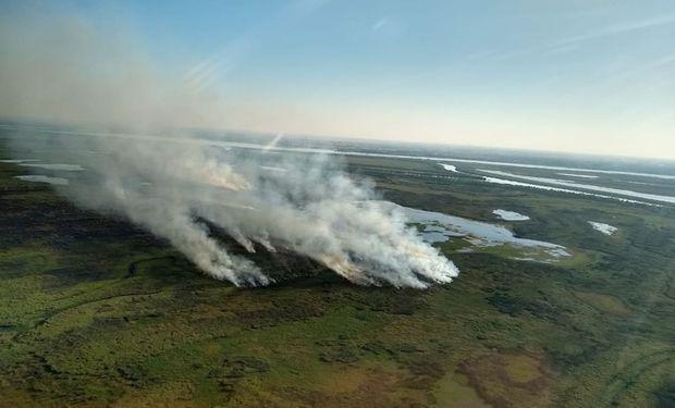 Cómo es el plan de forestación en respuesta a los incendios de las islas: plantarán 750 especies nativas