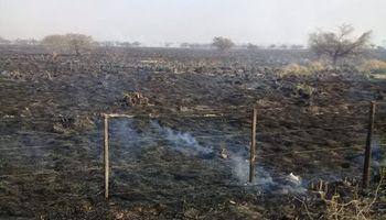 """Sequía y múltiples focos de incendio en el norte: """"Tanto la ganadería como la agricultura están perjudicadas"""""""