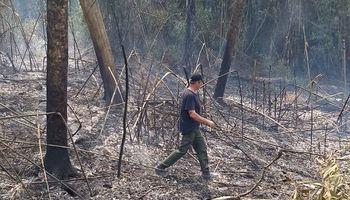 Incendios: en lo que va del año se perdieron más de 1 millón de hectáreas