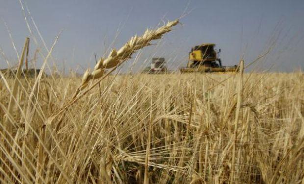 Incierto panorama para el trigo nuevo