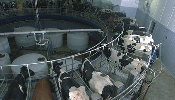 """Alberto Fernández: """"El productor de leche no tiene insumos en dólares"""""""