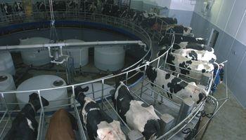 Los costos de los tambos grandes ya son equiparables a los precios de la leche