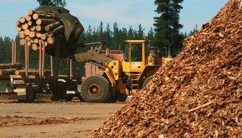 La industria forestal crece en malestar contra el Gobierno