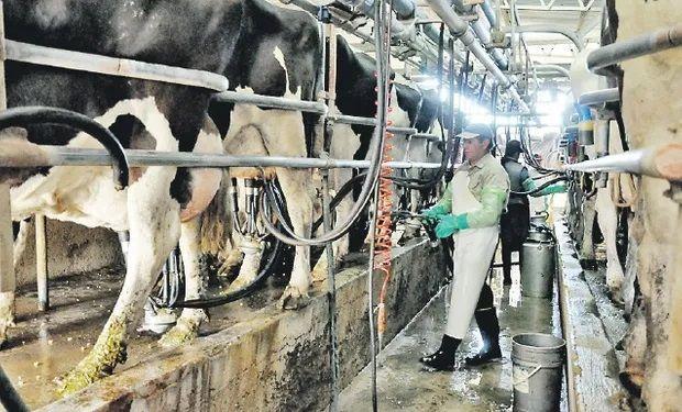 Coronavirus: cómo impactó la pandemia en la lechería mundial