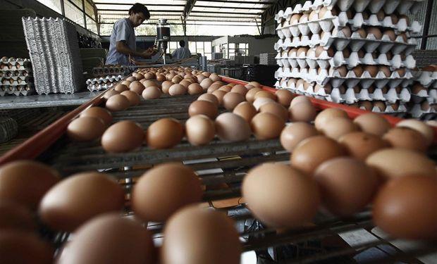 En 2015 las ventas externas brasileñas de ovoproductos fueron de 18.740 toneladas.