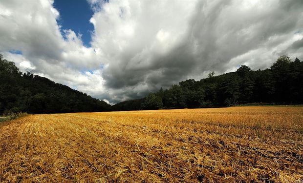 La inestabilidad no para la cosecha