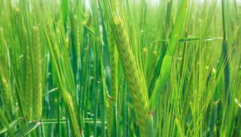 SISA: la información que los productores deben completar en octubre
