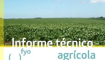 Para lograr buenos rendimientos, habrá que monitorear al trigo