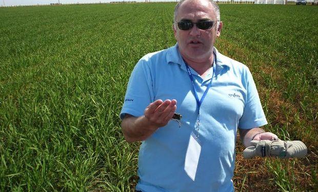 Juan Carlos Petoyan, Coordinador de Servicio Técnico Regional Sur, hizo un repaso de la historia reciente del cultivo.