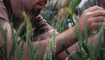 Ingenieros agrónomos plantean la necesidad de contar con una matriculación nacional