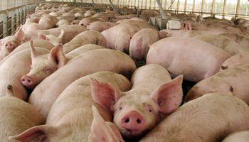 Río Negro: Justicia Federal suspendió el ingreso de la carne de cerdo