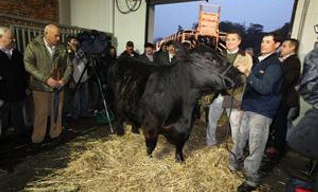Comenzó el ingreso de bovinos en La Rural