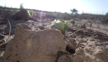La sequía podría recortar el ingreso de divisas en más de US$3200 millones