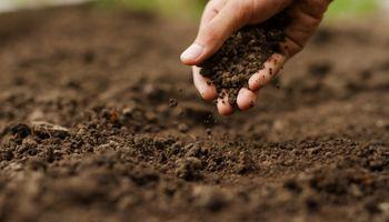 Agro: ofrecen más de un millón de dólares a startups que logren reducir la huella de carbono y mejorar la salud del suelo