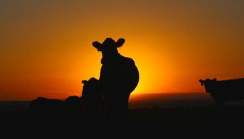 CSI versión rural: la genética forense como herramienta para luchar contra el abigeato