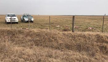 """Inseguridad rural. Faenaron 8 animales y dejaron otros 8 baleados: """"El delito se propaga y se hace una pandemia"""""""