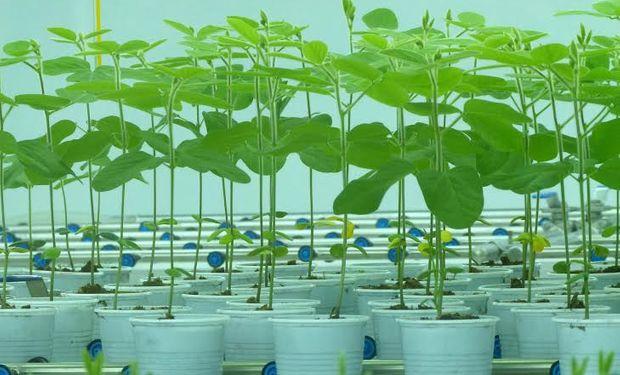 El instituto Seedcare de Syngenta se traslada a la décima edición de Expoagro. Foto: Agroagencia.