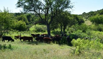 Lechería: aseguran que el verano podría generar un costo adicional de 26 dólares por vaca
