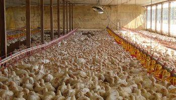 La industria avícola alertó por un combo complejo: incremento de costos, aumento salarial y precios congelados