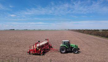 Avanza la siembra de maíz y la Niña compromete la campaña: cómo impactará