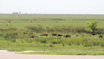 Piden prohibir la ganadería en el Delta del Paraná y evitar los incendios en las islas