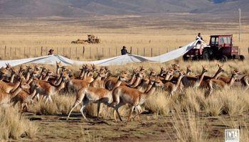 La diversidad del campo argentino en ocho imágenes del INTA