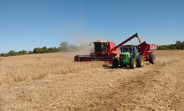 La maquinaria evoluciona, pero el problema persiste: la pérdida por cosecha en soja alcanzó los 120 kilos por hectárea