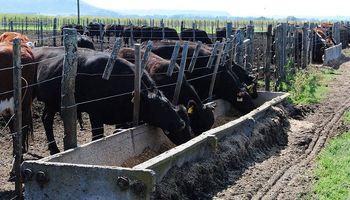 Tucumán: se invertirán US$ 2 millones en la producción de levadura proteica con caña de azúcar para ganado