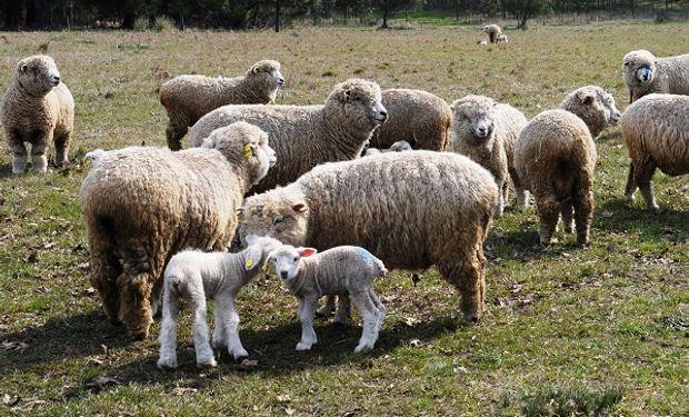 La suplementación estratégica busca cubrir un porcentaje de los requerimientos del animal en un momento determinado.