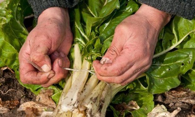 Informe que analiza la producción de verduras agroecológicas y compara sus rindes con los precios de venta.
