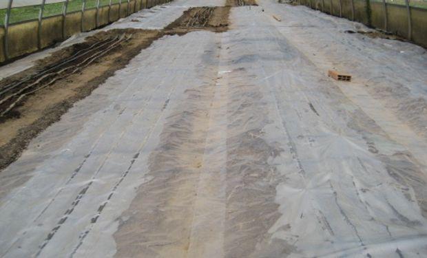 Se buscan distintas opciones para reemplazar el Bromuro de Metilo en la desinfección de los suelos y sustratos.