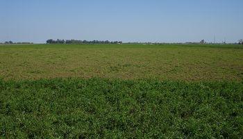Implantar pasturas de alfalfa tiene un costo de 22 mil pesos por hectárea: cuál es el componente de mayor injerencia