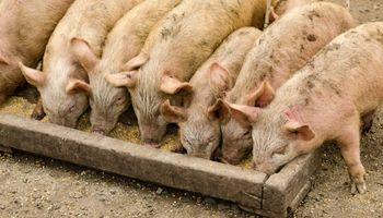 Brasil: China habilitó 7 plantas para exportar carne de cerdo