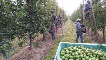 Aseguran que faltan trabajadores y peligra la cosecha