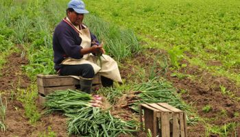 Federación Agraria se suma a la red global de agricultura familiar para intercambiar conocimiento