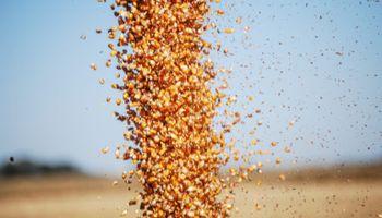 El poder adquisitivo del maíz es uno de los más altos de los últimos 10 años