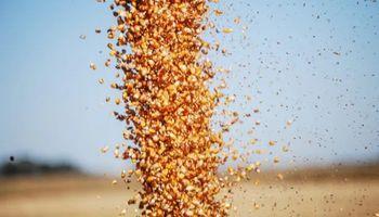 Soja vs maíz: la cosecha del cereal superó por por primera vez en 20 años a la de la oleaginosa